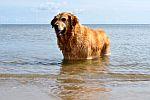 unser Hund Amy