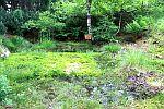 Hochmoor im Rennsteiggarten