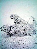 Schneevereiste Winterlandschaft