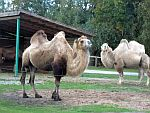 Artenvielfalt im Safaripark